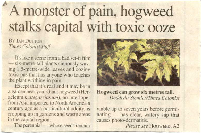 Newspaper Article on Hogweed
