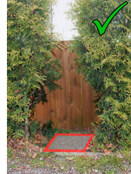 photo of hedge that has been trimmed for water meter access