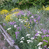 native wildflower garden