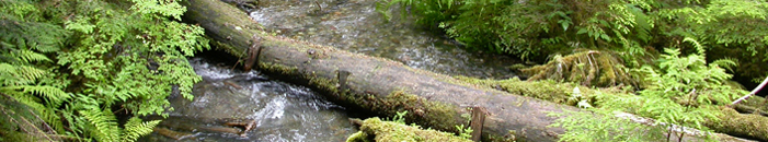 Fallen Tree Trunk Spanning a Stream