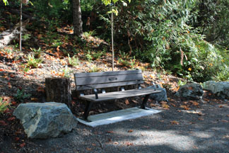 Donation Bench